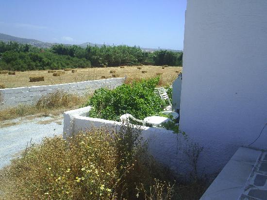 Naxos Sun Studios: The bush growing in one balcony