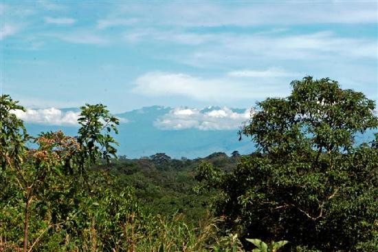 Chimps' Nest: View over Kibale Forest