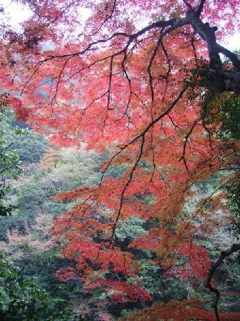 Chomonkyo Gorge: Autumn leaves along the gorge