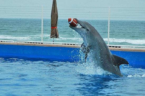 Marineland, FL: Playing football