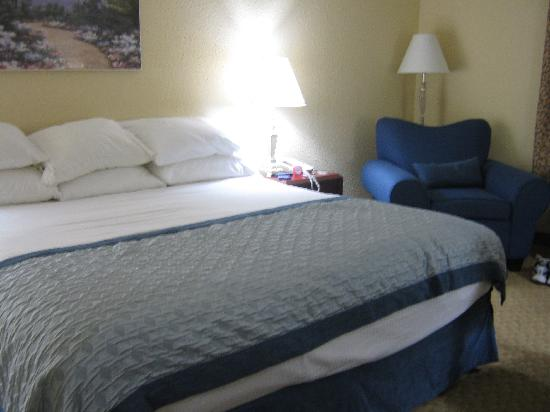 Ramada Jacksonville Hotel & Conference Center : Our bed notice the 6 comfy pillows