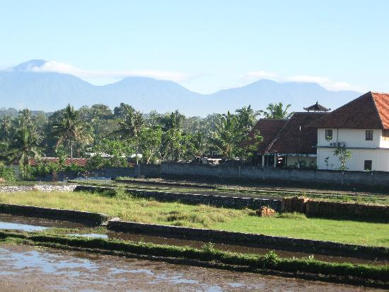 Putri Ayu Cottages: view