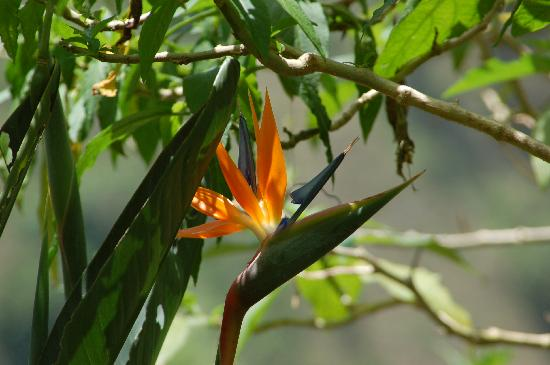 Bird Of Paradise In The Garden Picture Of Lime Tree Farm Blue