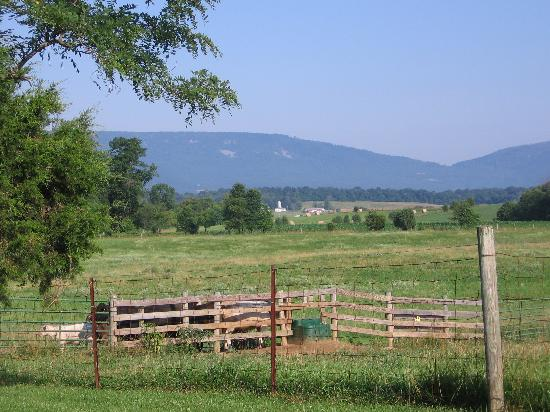 Piney Hill Bed & Breakfast: view behind the Rosebud Cottage