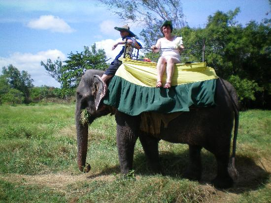 elephant safari habarana picture of sri lanka asia tripadvisor. Black Bedroom Furniture Sets. Home Design Ideas