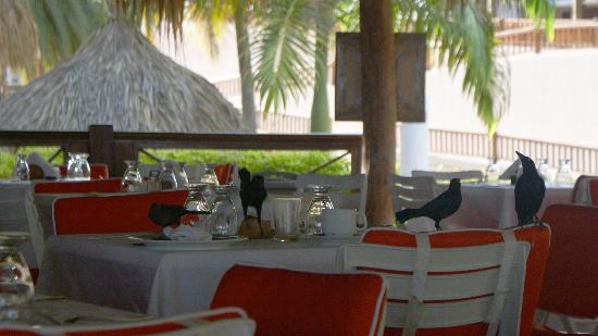 Hotel Cumanagoto Premier International Hotel : Birds for breakfast