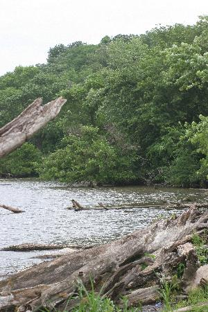 Nauvoo Country Lodge: Driftwood on the Mississippi