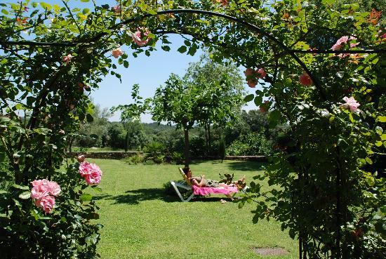 Mas d'Oleandre - maison d'hotes : garden