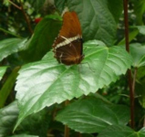 South Deerfield, MA: Butterfly on Leaf