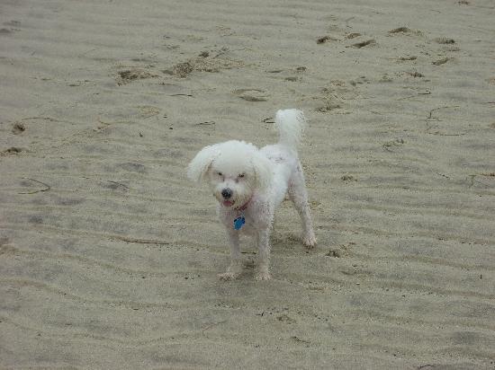 Tucker Inn: Dilly on the beach