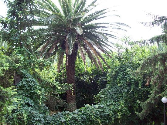 Il giardino condominiale picture of first floor rome - Giardino condominiale ...