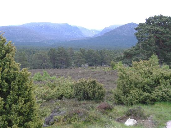 The Cairngorms from the footpath close to Rothiemurchus campsite