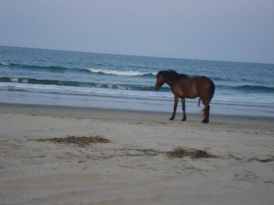 Wild Horse Adventure Tours: By ocean
