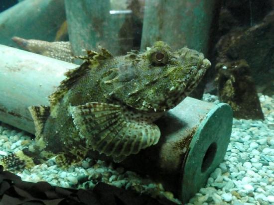 Sea Life Kelly Tarlton's Aquarium: Fish