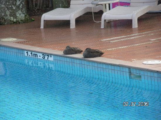 โรงแรมคราวน์พลาซ่าเซิร์ฟเฟอร์สพาราไดส์: The only life at the swimming pool!