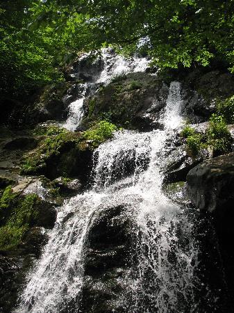 Piney Hill Bed & Breakfast: Hike at Dark Hollow Falls