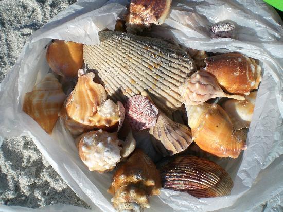 Bowman's Beach: my collection on Bowman's