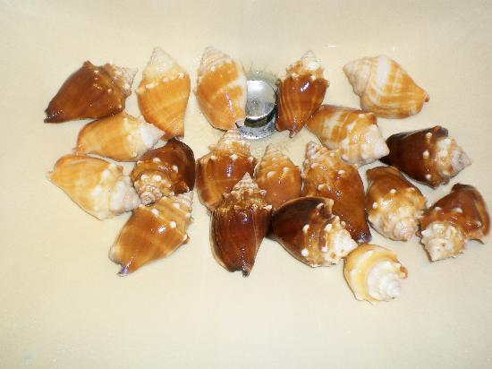 Bowman's Beach: the fighting conchs from Bowman's