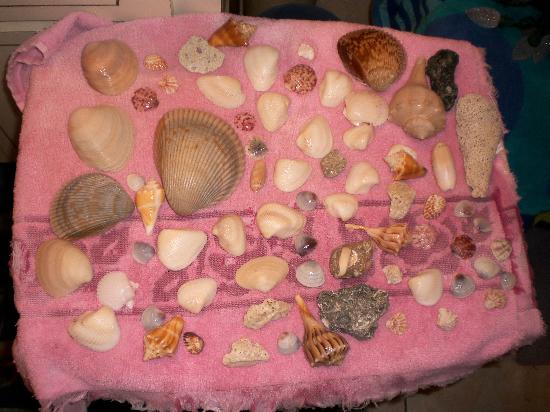Bowman's Beach: other shells from Bowman's