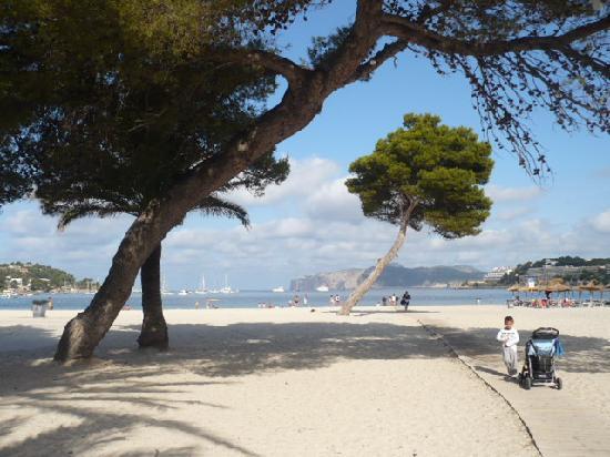 Plage de santa ponsa bild fr n hotel playa santa ponsa for Aparthotel d or jardin de playa santa ponsa