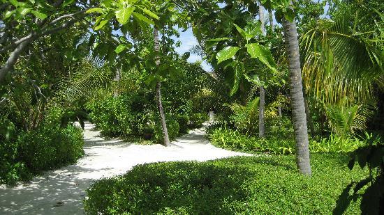 Bodu Huraa Maldives: il giardino