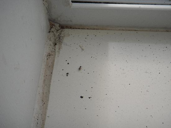 America's Best Value Inn Sandusky: Window sill, this was not the only bug!!!