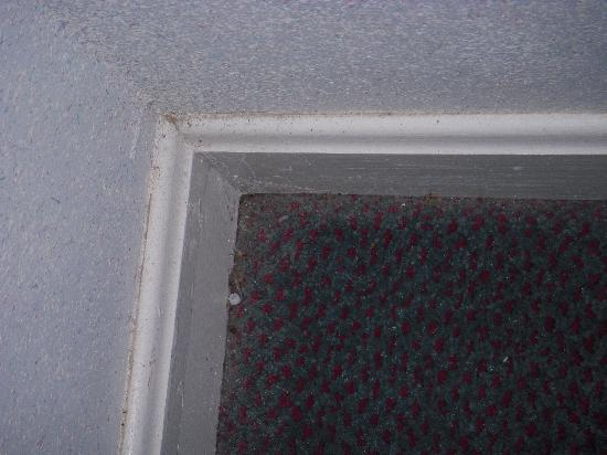 America's Best Value Inn Sandusky: No wonder there are bugs check out the floor