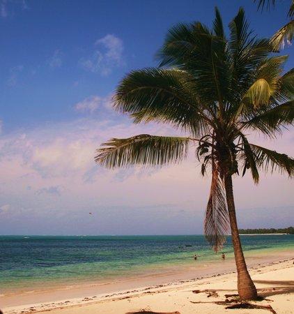 Driftwood Beach Club: The stunnig beach