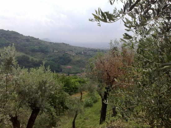 Villa Stabbia: And the last view :-)