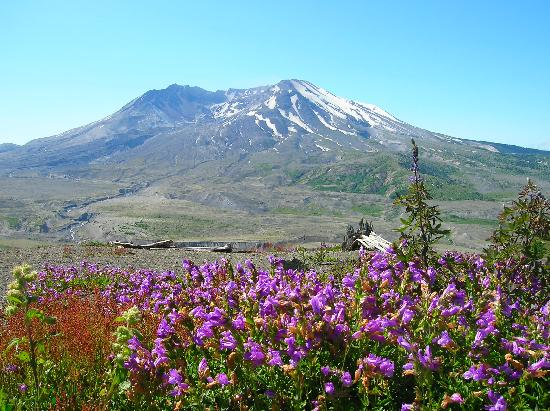 Timberland Inn & Suites: Mt. St. Helens