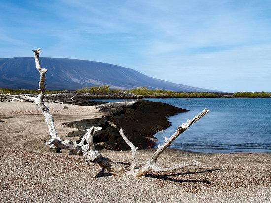 Galapagosøerne, Ecuador: Fernandina Island