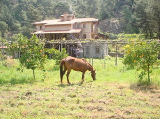 Pastoral Vadi Ecologic Life Farm: Farm house