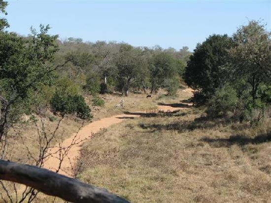 Garonga Safari Camp: View from the restaurant
