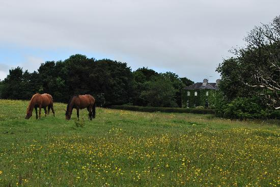 Lisdonagh Manor House: My favorite shot of the horses and the house