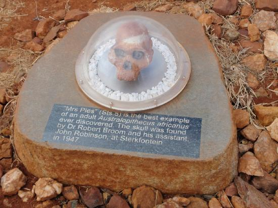 Maropeng Visitor Centre: a fossil on the path into the museum