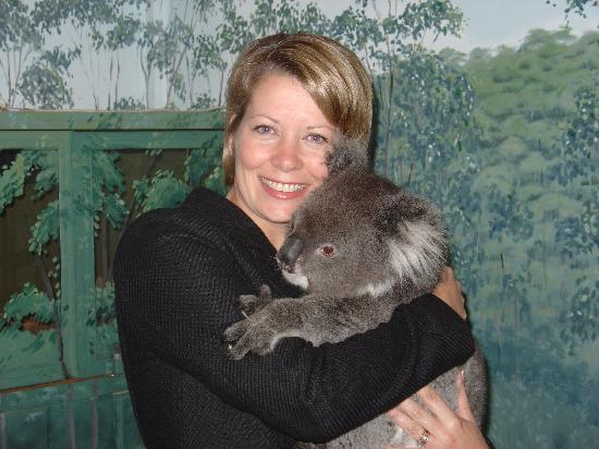 Crafers, Australie : Koala!
