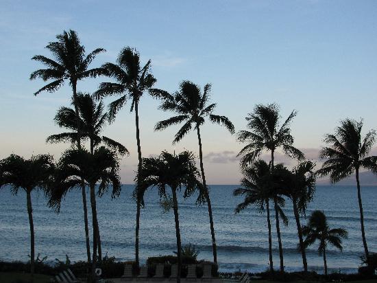 Mahina Surf: Our view
