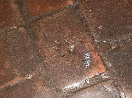 San Juan Bautista, CA: Animal track (wolf?) in chapel floor tile