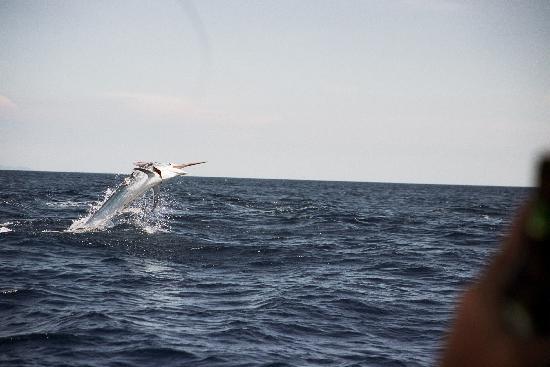 Mango Rosa Nicaragua: the fish