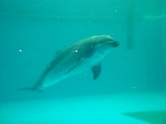 Shinagawa Aquarium: イルカ