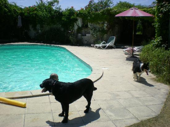 Domaine de Juliette: molly by the pool