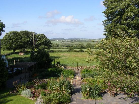 Neuadd Lwyd: Back garden