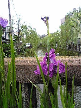 Suigo Sawara Ayame Park