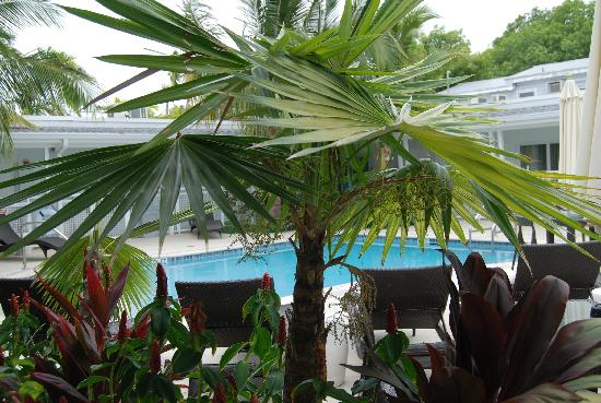 Orchid Key Inn: Another pool view