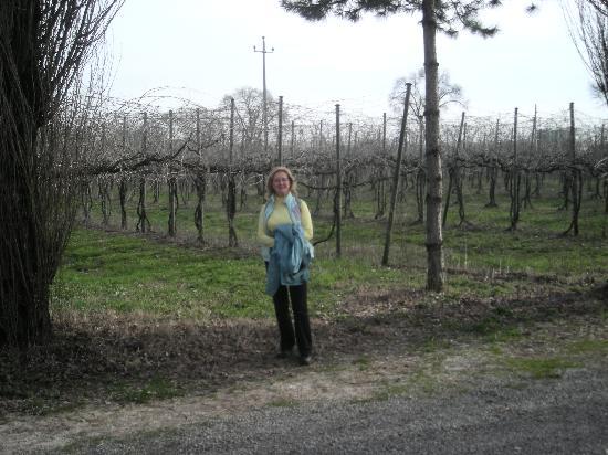 Il Casale B&B: The vineyard behind Il Casale