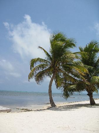 Pelican Reef Villas Resort: Beach at the Pelican Reef