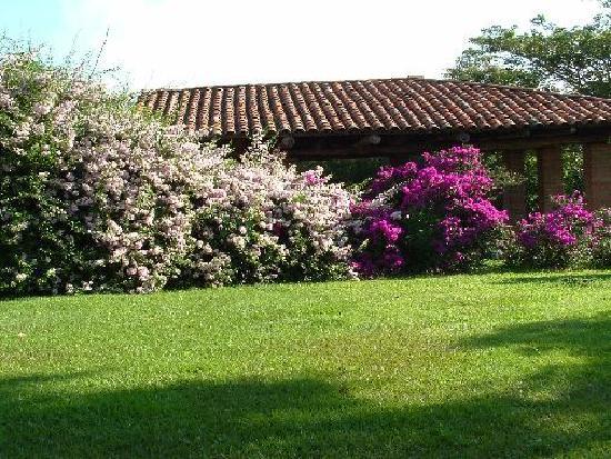 Pereira - Flowers