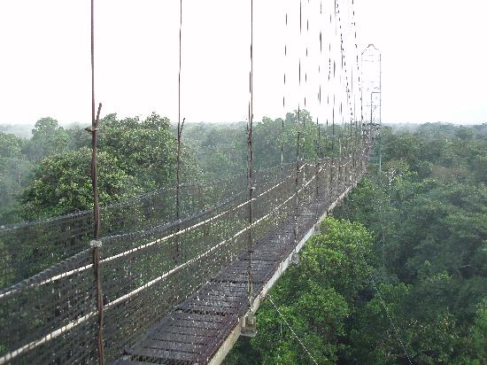 Coca, Equador: The Canopy Walkway