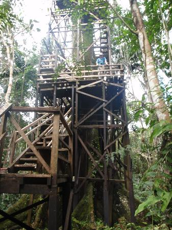 Coca, Ecuador: The Kapok Tower