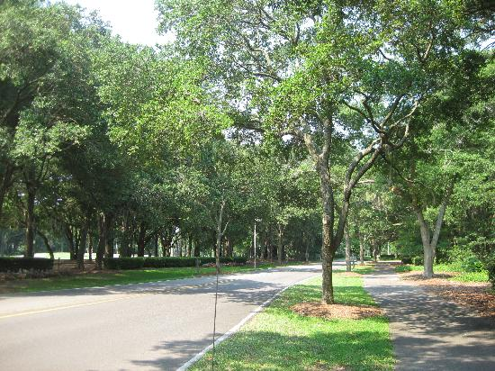 Island Links Resort : View of Coggins Point Road with bike path to the right of the picture.